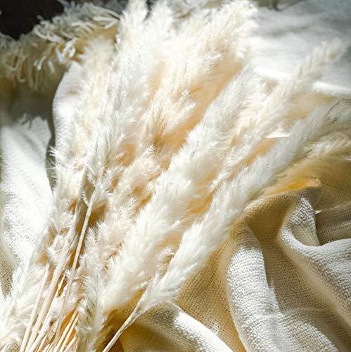 Amae | Pampasgras getrocknet | Trockenblumen Blumenstrauß Natur | Pampas Deko für Inneneinrichtungen | Fotografie & Hochzeit | weiß
