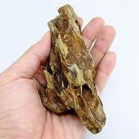 コケのインテリア コケリウム テラリウム コケリウム 石 天然石 気孔石S (形状お任せ)