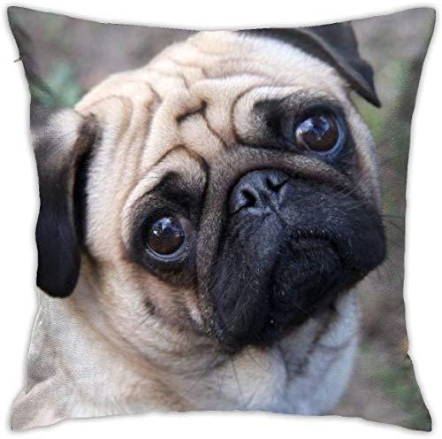 MODORSAN Lustige Mops Hund Blick auf Sie werfen Kissenbezüge dekorative Home Sofa dekorative 18'x18' Kissenbezug Fall Kissenbezug quadratische Kissenbezüge für Home Sofa Schlafzimmer Wohnzimmer