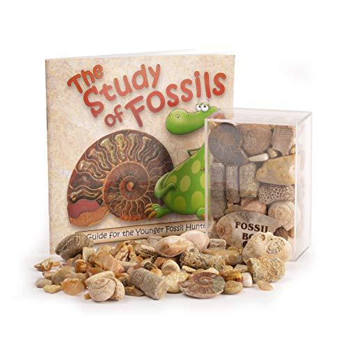 Fossil Box mit Studium der Fossilien Booklet (auf Englisch)
