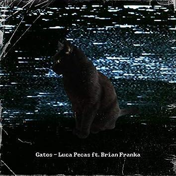 Gatos (feat. Brian Franka)