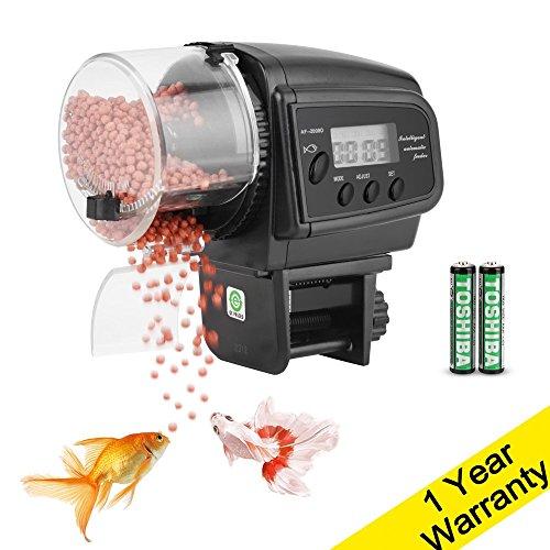 food timer fish - 7