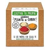 Garden Pocket - Kit Cultivo AROMÁTICA Curry