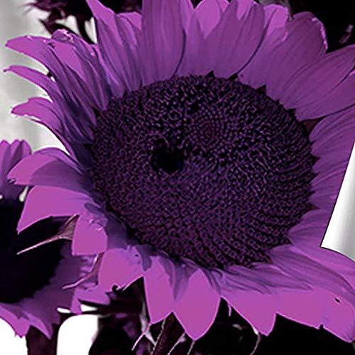 Sytaun Semi Di Girasole, Semi Di Girasole Giganti Premium Per Fiori In Crescita Teste Grandi, 100 Pezzi Semi Di Girasole Helianthus Giardino Fiorito Pianta Ornamentale Bonsai 100 pz