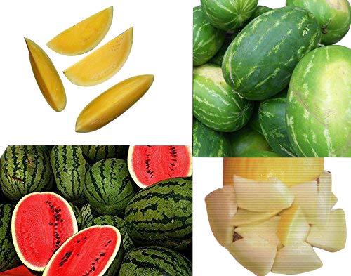 Wassermelonen-Melonen Mix **Super Süß und Aromatisch** ->4 Super Sorten<-