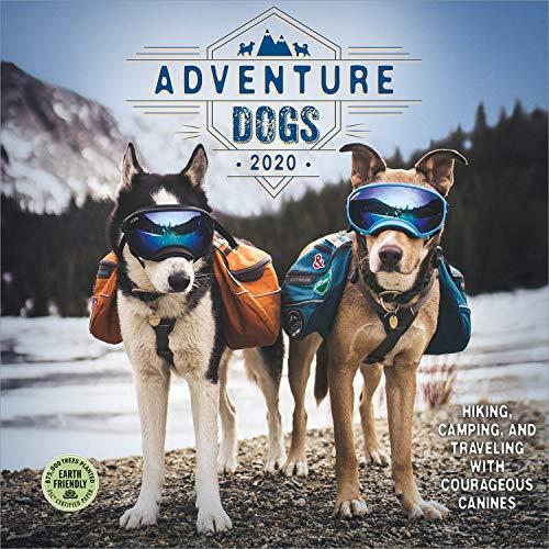 Adventure Dogs 2020 Wall Calendar