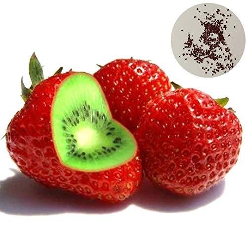 Catkoo 500 Unids Raras Semillas De Kiwi Fresas Jardín De Frutas Dulces Bonsai Garden Balcón Planta, Sin OGM, Rico En Vitamina C, Semillas De Producción Original EE. UU. Semillas de Kiwi y Fresa