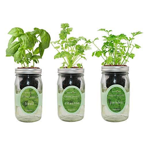 Plant seed set