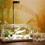 Acryl Terrarium Spider Breeding Box Montage Insektenzucht Box Reptile Fütterungsbox