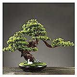 KGDC Planta Artificial con Maceta Árbol de Bonsai Artificial, 19 Pulgadas en macicie Artificial Plantas, Hermosa Planta de Pino Bonsai, para Zen Garden Decor Árbol Artificial para bonsái