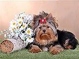 Pintura de diamante perro diamante bordado Animal completo mosaico de diamantes decoración del hogar pintura A4 30x40cm