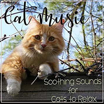 Cat Music: Soothing Sounds for Cats to Relax