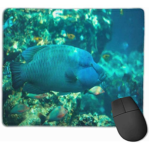 Gaming Mouse Pad, Schreibtisch Mousepad, Maus Mat Napoleon Fisch In Okinawa Churaumi Aquarium