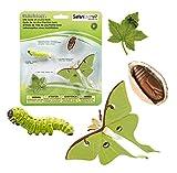 Safari Ltd. Ciclo de Vida de un Luna Moth- 4etapas de Vida
