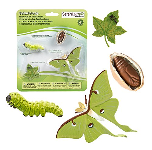 Safari Ltd. Cycle de Vie d'une Luna Moth- 4 Phases de la Vie