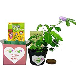 TickleMe Plant Gift Box Set