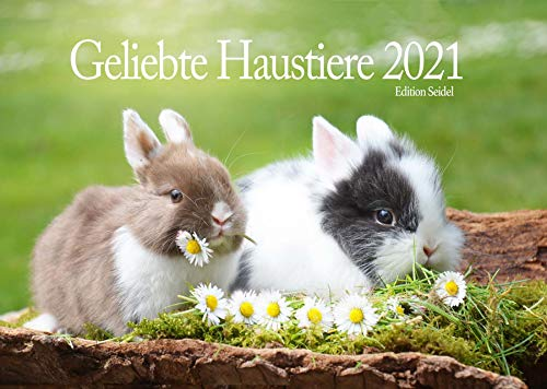 Edition Seidel Haustiere Premium Kalender 2021 DIN A3 Wandkalender Tiere Hund Katze Maus