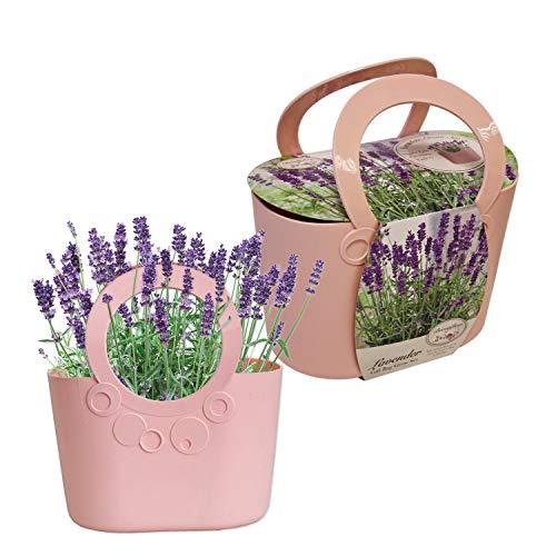 Beautifleur Lavendel-Pflanzset mit hochwertiger Handtasche