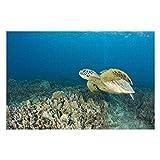 The Green Sea Turtle, (Chelonia Mydas), Is The Puzzles for Adults, 300 piezas rompecabezas para niños y niñas, 10' x 15'