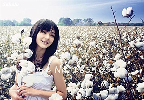 Graine de coton de haute qualité rare Bonsai Blanc Gossypium Fleur Graine de bricolage jardin Plantes 30 particules en pot Livraison gratuite