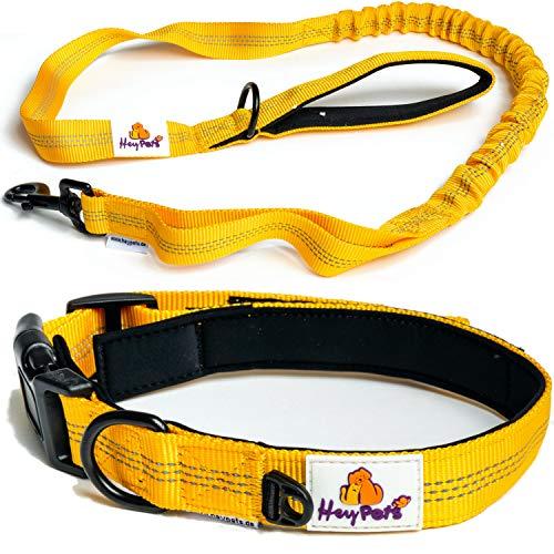 Hey Pets® Hundehalsband und Hundeleine Set,Flexible Führleine,gelbe Nylon-Leine weich gepolstert,bissfeste Hundeleine mit Anti-Zug Ruckdämpfer,Trainingsleine für Hunde mit Dämpfer,Hunde-Leine