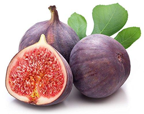 Figuier Fruit Ficus carica Ficus Carica Seeds 25 PCS VARIÉTÉ DE FRUITS GRAND!