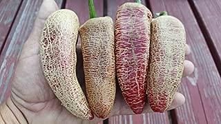 Farmers Market Jalapeno Pepper 10+ Seeds