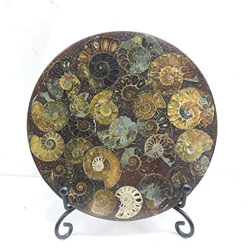 Oneriverspring40 Natural Ammonite Plate Fossil Slice Mineral Specimen Display Crystal Stone Home Decoration And Free Stand