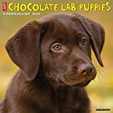 Just Chocolate Lab Puppies 2022 Wall Calendar (Labrador Retriever Dog Breed)
