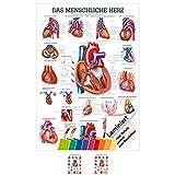 Das Herz Lehrtafel Anatomie 100x70 cm medizinische Lehrmittel -