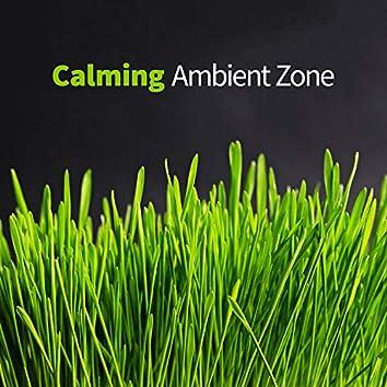 Calming Ambient Zone