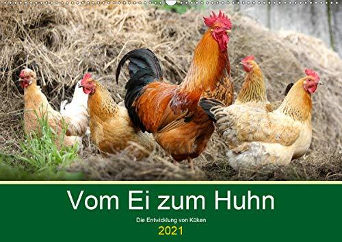Vom Ei zum Huhn. Die Entwicklung von Küken (Wandkalender 2021 DIN A2 quer)
