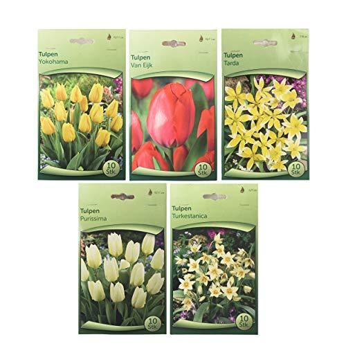 Blumenzwiebeln - Mix - 5 Sorten - seperat verpackt -Tulpen- wunderschön, einfach, natürlich