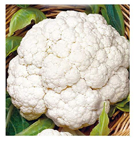 4400 c.ca sneeuwbal bloemkoolzaden - medium laat - brassica oleracea - in originele verpakking - gemaakt in italië - bloemkool - cf006