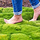 Beautytalk-Garten 100 Stück Moos Samen Immergrün Bodendecker Rasen Samen Moos Steinbrech Moosphlox Blumensamen Saatgut winterhart mehrjährig Garten Pflanzen