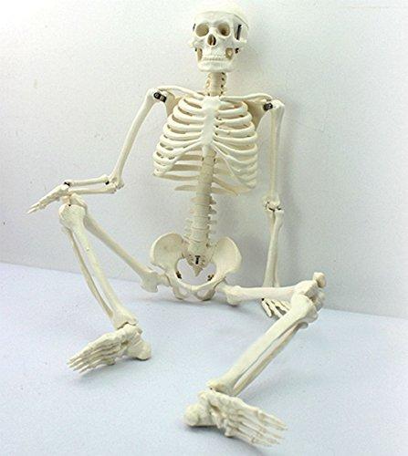 Leaftree Human Anatomical Skeleton Model,45CM