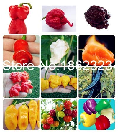Bloom Green Co. 200 pcs Chilli Pepper Vegetable Organic Sweet paprika chili bonsais bonsai plant home garden indoor plants Vegetable Seedsplants: 24