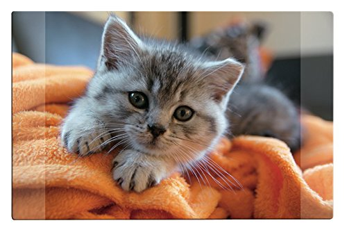 Schreibtischunterlage / Größe: 68x44cm / mit Katzenmotiv