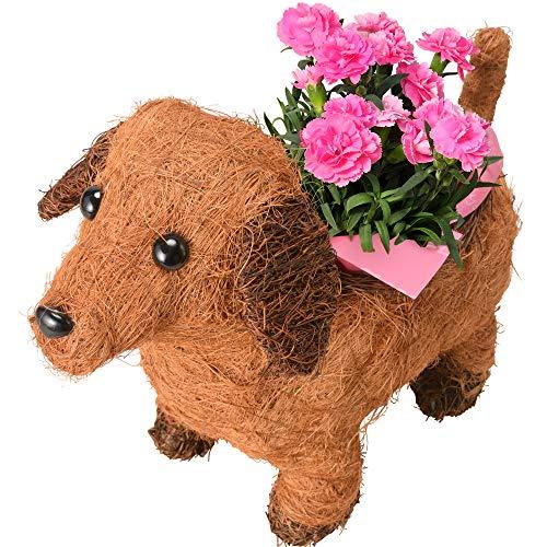 花のギフト社 母の日 わんわん カーネーション 鉢植え 鉢花 プレゼント 花 鉢 フラワーギフト 茶