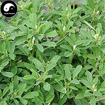 Samen Keimung: 100 Stück: Kaufen Allgemeine Bockshornkleesamen Pflanzen Chinese Trigonellae Herb für Hu Lu Ba