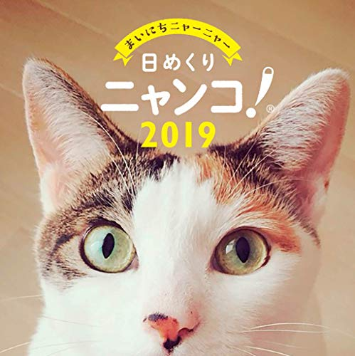 日めくりニャンコ!2019年 猫の日めくりカレンダー