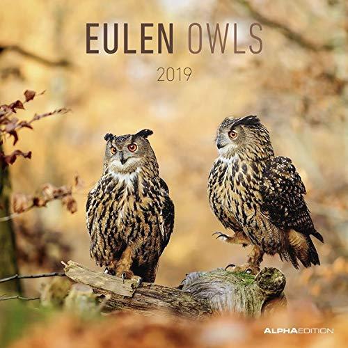 Eulen 2019 - Broschürenkalender