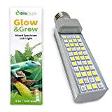 The Bio Dude 6' Glow & Grow Best Plant Growth Reptile & Amphibian LED Bulb for terrariums