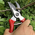 "gonicc 8"" Professional Sharp Bypass Pruning Shears (GPPS-1002), Tree Trimmers Secateurs,Hand Pruner, Garden Shears,Clippers for The Garden. 10 Drop forged body and handles, quality blade made of high carbon steel with Ultra-fine Polishing Technology. Ideal for deadheading, trimming, shaping on tree, roses, annuals, vegetable, flower gardens, bonsai and other plants. Ergonomically designed non-slip handles are strong,lightweight,and comfortable."