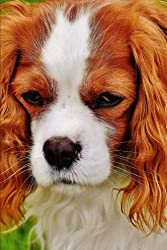 The Cavalier King Charles Spaniel Dog Journal: Lined Notebook/Diary[Dog Breeds]