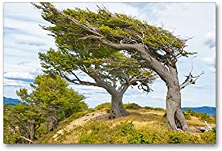 CALVENDO Lienzo de 90 cm x 60 cm Horizontal, Arboles Banderas, los árboles con Forma de Viento Fuerte Patagonias, Imagen sobre Bastidor. Patagonia, Argentina Lugar; Lugares
