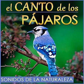 El Canto de los Pajaros. Sonidos de la Naturaleza.