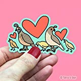 Wildlife Stickers, Gambel Quail Family, Cute Decals for Kids, Bird Sticker, Water Bottle Decals