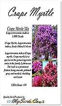 Big Pack - (1,000) Crape Myrtle Mix, Lagerstroemia Indica Tree Seeds - by MySeeds.Co (Big Pack - Crape Myrtle)