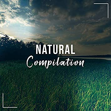 #12 Natural Compilation for Zen Spa